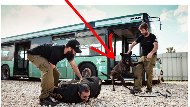אוהבים כלבים? הכירו את קורס כלבי העבודה ובטחון שכובש את ישראל